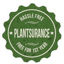 Ty Ty Nursery Plantsurance Policy great selection of random kinds of fruit trees
