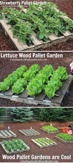 Wood Pallet Garden, Wood Pallet Ideas, DIY Wood Pallets, Gardening with Wood Pallets,