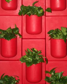 Modular wall tile planters....definitely will be integrated in a kitchen at some point...think herb wall
