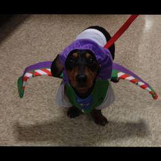 Halloween dachshund Wiener dog buzz light year
