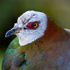 Pigeon by cm2852, via Flickr