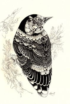 Animal Illustrations And Shirt Designs By Iain Macarthur (1)