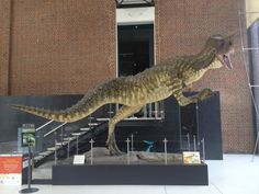 The Western Australian Museum, Perth Perth, Dinosaurs, Westerns, Places To Go, Museum, Activities, History, City, Blog