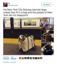 Dogs in bags are too pure for this world.