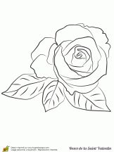 ravissante rose saint valentin