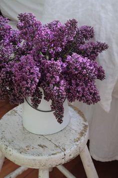 Robin Stubbert Photographer - Still Life Photos Lilacs in a pail.