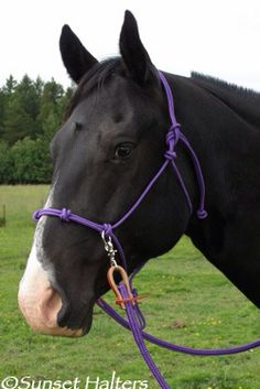 Halter cord 14 in sidepull 4 knot noseband. Can add browband and strap. Horse Bridle, Horse Halters, Horse Stables, Rope Halter, Horse Games, Natural Horsemanship, Horse Training, Big Dogs, Horses