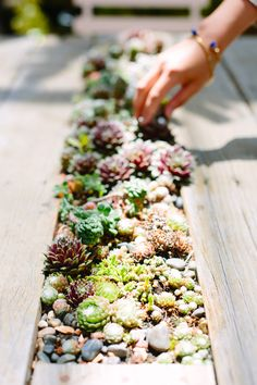 A great idea! Succulent table centerpiece! Could see this being an easy DIY