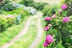 お出かけ先の画像 by マリモさん | お出かけ先と紫陽花と野辺の花と今日の一枚とアジサイ 紫陽花とナチュラルスタイルとブルーの花と初夏の花木とあじさいフォトコンテスト2016と小道と紫陽花大好き