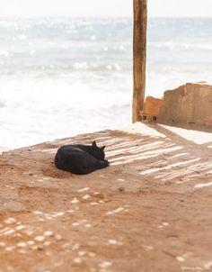 Beach, sand, black cat / Garance Doré
