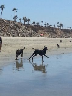 Dog Beach - a dog friendly zone of the Huntington Beach's coast where you can frolic in the waves with your furry pal.
