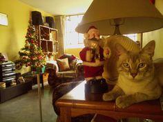 Navidad, Navidad ♪