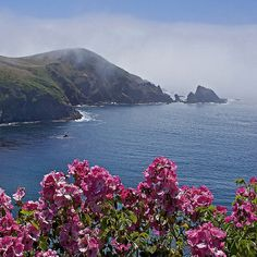 Rita Crane Photography: California / coast / ocean / fog / roses / sea stacks / Fog and Roses, Albion ~ Mendocino County, Northern California by Rita Crane Photography, via Flickr