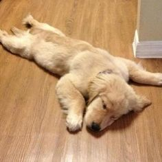 """Now I know what my human means when she says she's """"flat out!"""""""
