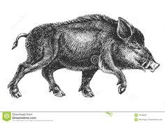 wild pig tattoo - Buscar con Google