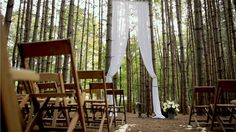 Ceremony backdrop in the woods