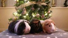 Sent in by Caroline Laytham #treefie #Christmas