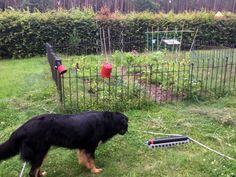 Kinderleichte Montage für einen Garten im Garten, zum Schutz vor neugierigen Hundenasen. Für uns eine perfekte Lösung , ein ändern ist jederzeit möglich . Lieferung und Abwicklung der Bestellung top ! Montage, Purchase Order, Gardening