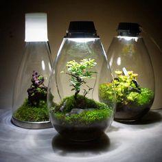 【mosslight1955】さんのInstagramをピンしています。 《#苔あかり #モスライト#mosslight… Bali Garden, Moss Garden, Garden Terrarium, Succulent Terrarium, Ikea Terrarium, Turtle Terrarium, Aquarium Garden, Planted Aquarium, Planting Succulents