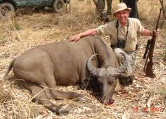Dwarf Forest Buffalo from Cameroon
