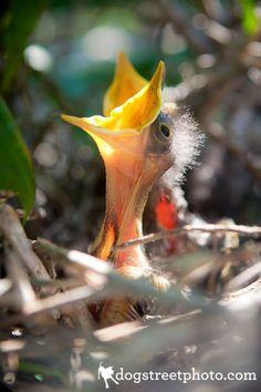 Baby Mocking Birds