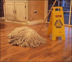 A dog looks like a mop