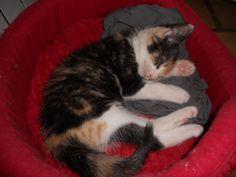 Gaïa squatte le panier d'Anouchka #chat #cat #chambredhote #bandb #cute #mignon #tarn #castelnaudemontmiral #gaillac http://lamaisonduchai.com/accueil.html