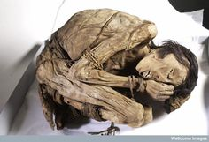 A naturally preserved Peruvian mummified male, possibly from the North coast of Peru where the Chimu culture buried their dead in 'mummy bundles', curled up in foetal position with bound hands and feet (c.1200-1400).