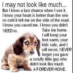 I love my rescue <3