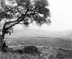 The beautiful Santa Clara valley...a sea of orchards.  All gone, every bit of it.  Now the asphalt soaks up the sun's heat and reflects it right back to you.  Horrible.