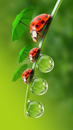 Ladybug Family Wallpaper by Sarchotic - 85 - Free on ZEDGE™ Beautiful Nature Wallpaper, Beautiful Bugs, Beautiful Butterflies, Amazing Nature, Beautiful Flowers, Colorful Flowers, Tier Wallpaper, Animal Wallpaper, Flower Wallpaper