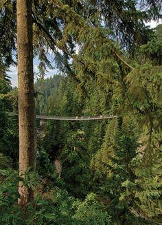 Capilano Suspension Bridge near Vancouver, BC