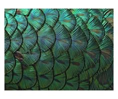 "Dekoracja ścienna ""Green Feather"", 80 x 4 x 60 cm Green Pattern, Techno, Plant Leaves, Plants, Beautiful, Feather, Art Print, Printing, Quill"