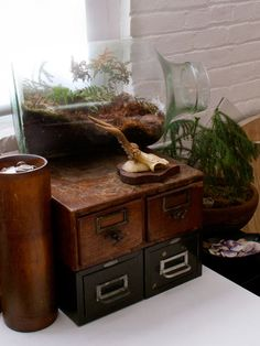 i heart library card catalog drawers and i heart terrariums. and not surprisingly, i love them together!