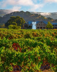 Wine Country Print Napa Valley Winery Photo California Decor Sonoma Fine Art