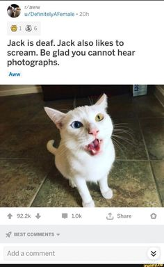 Be glad you cannot hear photographs. Cute Little Animals, Cute Funny Animals, Funny Cute, Cute Cats, Funny Animal Memes, Stupid Funny Memes, Cat Memes, Animal Pictures, Funny Pictures