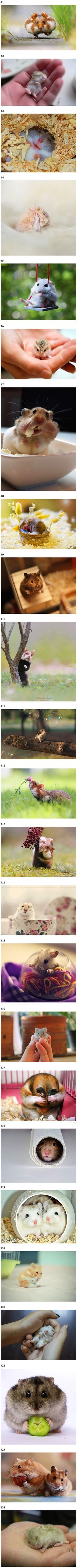 Photographers capture 20 images that show why the internet needs more hamsters.