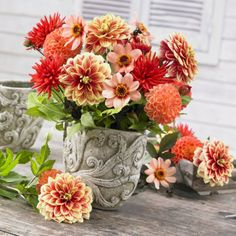 Dahlias look charming in containers and make great cut flower arrangements!