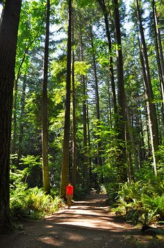 Pacific Spirit Regional Park. Vancouver, Canada