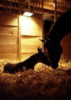 A Mother's Love #horsesmakelifebeautiful #horses #lovehorses esteading.com/shop