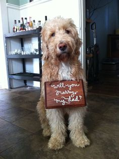 if i had a dog this would be the only acceptable way to propose