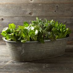 Found Galvanized Bathtub Planter   Williams-Sonoma