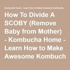 Want to divide your SCOBY so you can share it with a friend or grow two batches instead of one? Then you need to divide your SCOBY. Deep Cleaning Tips, House Cleaning Tips, Diy Cleaning Products, Cleaning Hacks, Kombucha Recipe, Kombucha Tea, Kombucha How To Make, How To Make Drinks, Making Kombucha