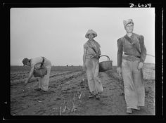 """""""Women in war. Agricultural workers. With the nation's manpower swelling the ranks of the armed forces, women must step into many new occupations in both urban and rural life. These women harvest hands in Rochelle, Illinois, are helping the national welfare by picking the summer asparagus crop."""" Photo by Ann Rosener, Sept 1942. Farm Security Administration - Office of War Information Photograph Collection. Library of Congress Prints and Photographs Division."""
