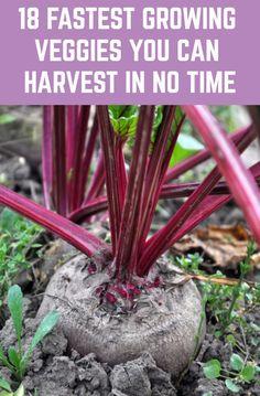 5899 Best Garden Images In 2020 Garden Outdoor Gardens Plants