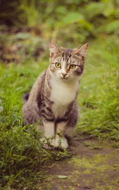 (Sergey Chernov) Kitty, cat, furry, cute, nuttet, presious, adorable, sweet, photo