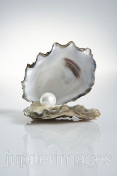 Oyster With Pearl Inside | Stock Images - Royalty-Free Stock Photography Images and Photos at ...