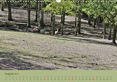 Oermter Berg - Wildgehege und Volkspark - CALVENDO - Elke Stürznickel
