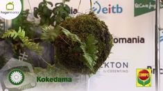 Kokedamas – Mis Jardines Arte Floral, Dream Garden, Herbs, Outdoor, Gardening, Boho, Youtube, Style, Garden