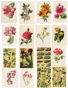 Free Vintage Botanical Printables